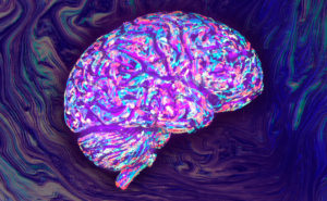 A drawing of human brain